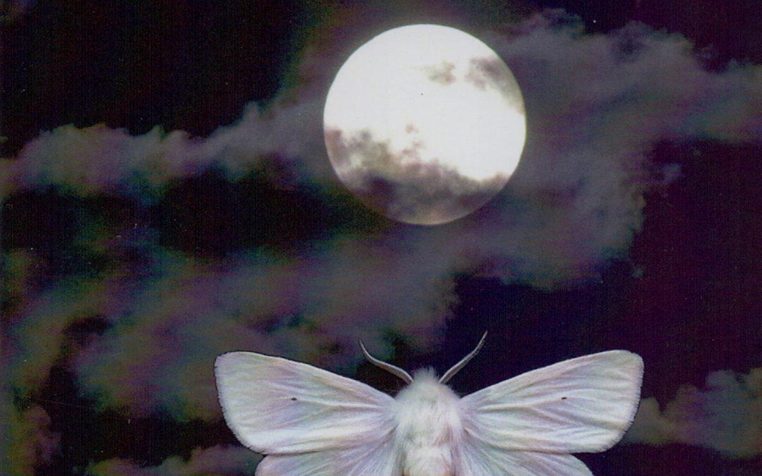 """Moth Man – """"Where the Dead Birds Go"""""""